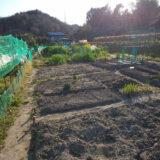 園芸療法をニューノーマルビジネスへ